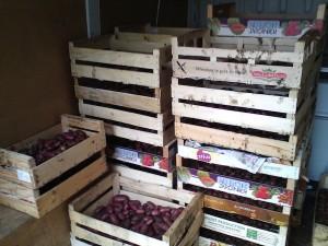 Une récolte moins importante que prévue, du fait d'une météo 2013 capricieuse