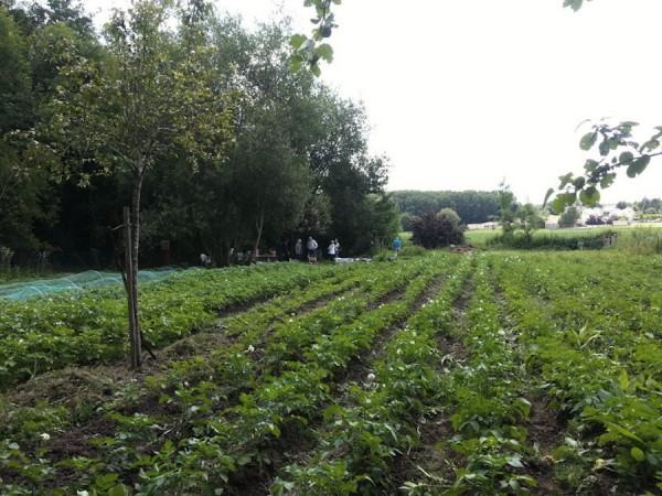Les Jardiniers Solidaires, futures récoltes 2014
