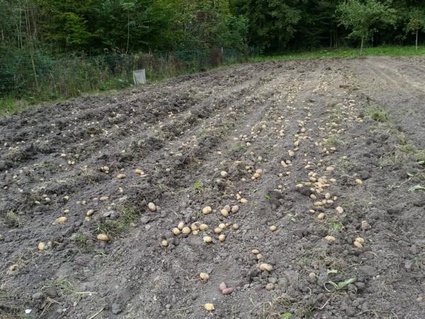 Les Jardiniers Solidaires – Récoltes septembre 2014