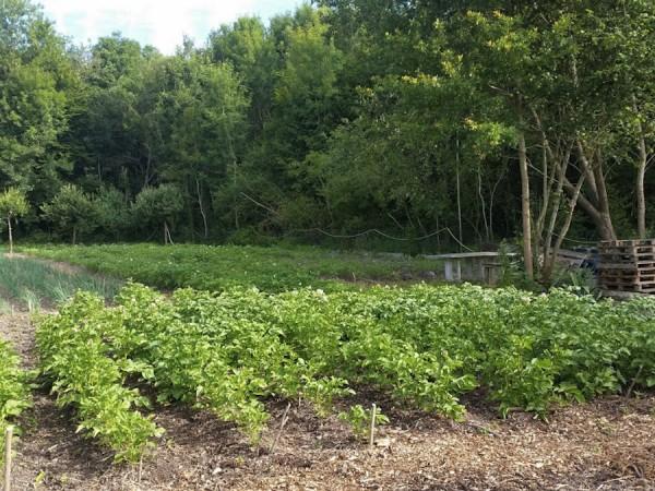 Jardiniers Solidaires, préparation et futures récoltes 2015