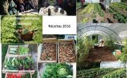 Jardiniers Solidaires : récoltes 2016