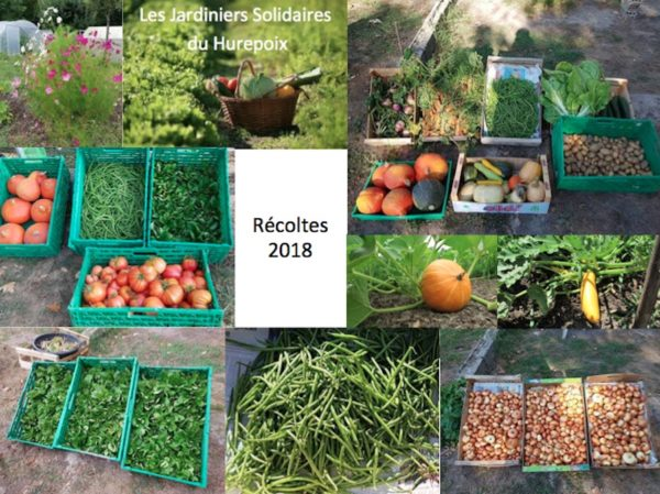 Jardiniers Solidaires : récoltes 2018