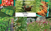 Jardiniers Solidaires : récoltes 2019