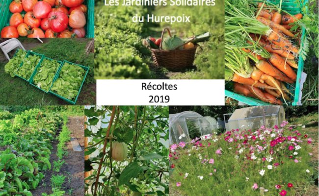 Jardiniers Solidaires : récoltes 2019