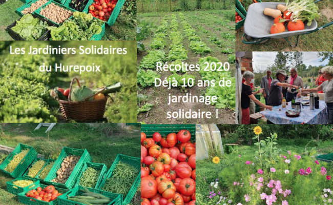 Jardiniers solidaires : récoltes 2020